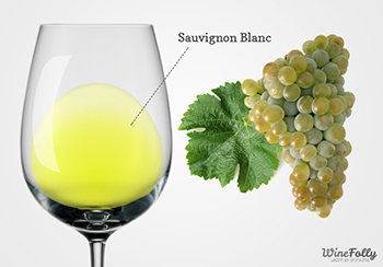 Taça e cacho sauvignon blanc wine folly